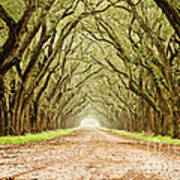 Tunnel In The Trees Print by Scott Pellegrin