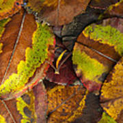 Turning Leaves 4 Print by Stephen Anderson