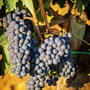 Tuscan Vineyard Print by Brian Jannsen