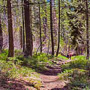 Twisp River Trail Print by Omaste Witkowski