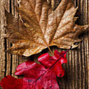 Two Leafs  Print by Garry Gay