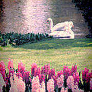 Two Swans Print by Jasna Buncic