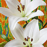Two White Lilies Print by Garry Gay