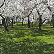 Under The Cherry Blossoms - Washington Dc. Print by Mike McGlothlen