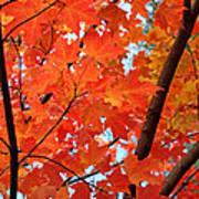 Under The Orange Maple Tree Print by Rona Black