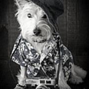 Vacation Dog With Camera And Hawaiian Shirt Print by Edward Fielding