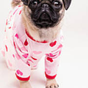 Valentine's Day - Adorable Pug Puppy In Pajamas Print by Edward Fielding