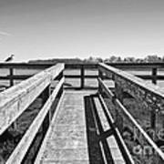 View Of The Elkhorn Slough From A Platform.  Print by Jamie Pham