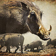 Warthog Profile Print by Ronel Broderick