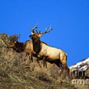 Watchful Bull Print by Mike  Dawson