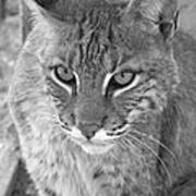 Watchful Eyes Black And White Print by Jennifer  King
