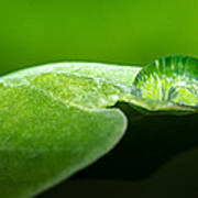 Water Drop Print by Tin Lung Chao