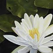 Water Lily Print by Joan Swanson