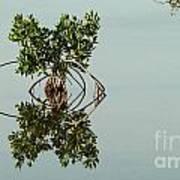 Water Pond  Print by Javier Correa