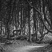 We Follow The Path Print by Jon Glaser