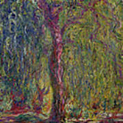 Weeping Willow Print by Claude Monet