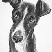 Whippet Black And White Print by Kate Sumners