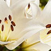 White Flowers Print by Oscar Karlsson