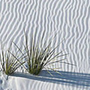 White Sands Grasses Print by Steve Gadomski