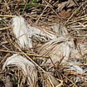 White-tailed Deer Hair Print by Linda Freshwaters Arndt