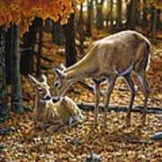 Whitetail Deer - Autumn Innocence 2 Print by Crista Forest