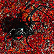 Wicked Widow - Rouge Print by Al Powell Photography USA