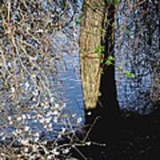 Wild Cherry Tree On The Sacramento River  Print by Pamela Patch