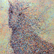 Wild Horse Print by James W Johnson