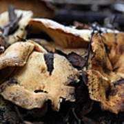 Wild Mushrooms On The Forest Floor - 5d21078 Print by Wingsdomain Art and Photography
