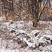 Winter Forest Panorama Print by Elena Elisseeva