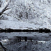 Winter Reflections Print by Steven Milner