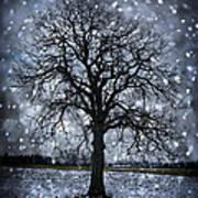 Winter Tree In Snowfall Print by Elena Elisseeva