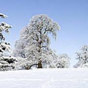 Winter Tree Line Print by Tim Gainey
