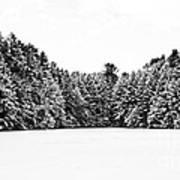 Winter Trees Mink Brook Hanover Nh Print by Edward Fielding