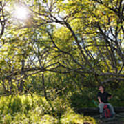 Woman Sitting On Bench - Bright Green Trees Sun Is Shining Print by Matthias Hauser