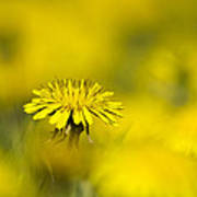 Yellow On Yellow Dandelion Print by Christina Rollo