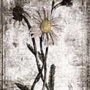 Yesterday's Garden II Print by Bonnie Bruno