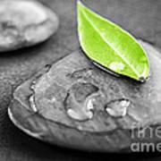 Zen Stones Print by Elena Elisseeva