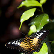 A Butterfly Perches On A Leaf Print by Taylor S. Kennedy