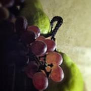 Back Lit Grape Still Life Print by Andrew Soundarajan