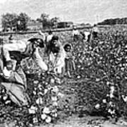 Cotton Industry, Early 20th Century Print by