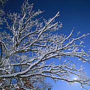 Fresh Snowfall Blankets Tree Branches Print by Tim Laman