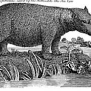 Hippopotamus Print by Granger