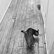 Kitty Print by Nina Mirhabibi
