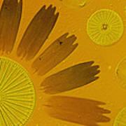 Microscopic Arrangement Print by Darlyne A. Murawski