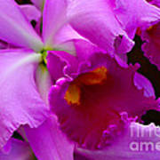 Orchid 5 Print by Julie Palencia