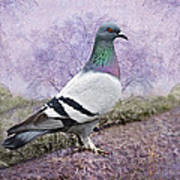 Pigeon In The Park Print by Bonnie Barry