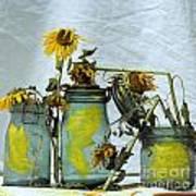 Sunflowers .helianthus Annuus Print by Bernard Jaubert