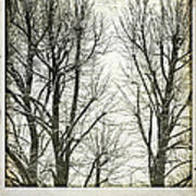 Winter Trees Print by Silvia Ganora