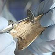 Neanderthal Dna Extraction Print by Volker Steger